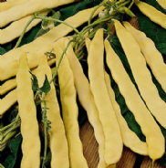 Climbing French Bean Goldfield 20 seeds